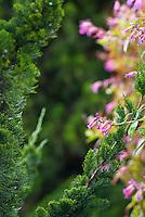 One of the many sights at Alii Kula Lavender farm and gardens at the base of Haleakala, Kula