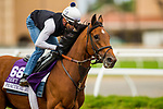 DEL MAR, CA - NOVEMBER 01:  Practical Joke, owned by Klaravich Stables Inc  & William H. Lawrence and trained by Chad C. Brown, exercises in preparation for TwinSpires Breeders' Cup Sprint**ENTERED IN MULTIPLE RACES** at Del Mar Thoroughbred Club on November 01, 2017 in Del Mar, California. (Photo by Alex Evers/Eclipse Sportswire/Breeders Cup)