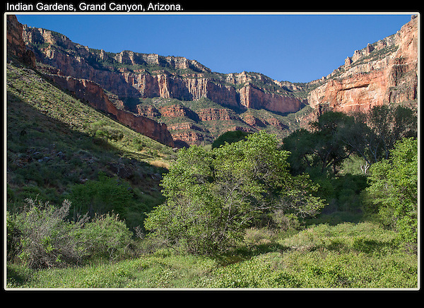 Twice I've backpacked down to Phantom Ranch via the South Kaibab, then back up on the Bright Angel Trail, a perfect loop.<br /> The oasis of Indian Gardens, Grand Canyon National Park. .  John offers private photo tours in Arizona and and Colorado. Year-round.