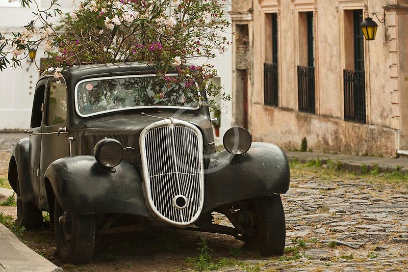 Uruguay, Colonia de Sacramento, Plants growing in antique black automobile