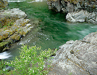 Green pool with flowers on Quartzville Creek Wild and Scenic River. Oregon