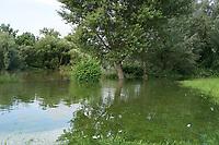 Ueber die Ufer getretener Erfelder Altrhein beim Darmstaedter Schwimm- und Wassersportclub - Suedhessen 15.07.2021: Hochwasser am Rhein des suedhessischen Ried