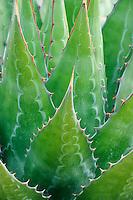 Pan Global Plants (Nick Macer)