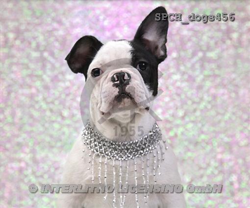 Xavier, ANIMALS, dogs, photos(SPCHdogs456,#A#) Hunde, perros