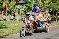Cambodia.  Transporting Firewood, Plus a Friend and his Bicycle.