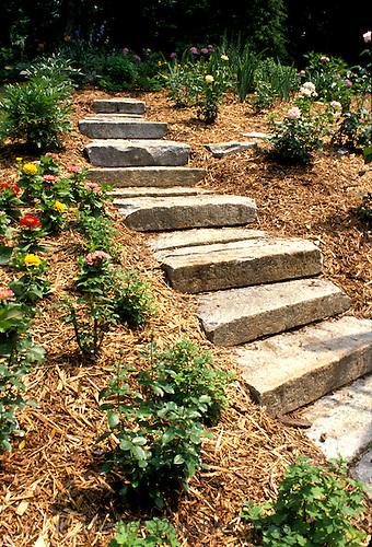 Stone steps up landscaped slope
