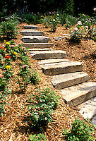 Stone steps up landscaped slope