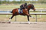 #117Fasig-Tipton Florida Sale,Under Tack Show. Palm Meadows Florida 03-23-2012