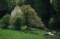 Europe/France/Midi-Pyrénées/81/Tarn/Env de Lacaune: Le massif du Sidobre (650 mètres)
