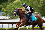 SHA TIN,HONG KONG-MAY 03: Stormy Antarctic,trained by Ed Walker,prepares for the Champions Mile at Sha Tin Racecourse on May 3,2017 in Sha Tin,New Territories,Hong Kong (Photo by Kaz Ishida/Eclipse Sportswire/Getty Images)