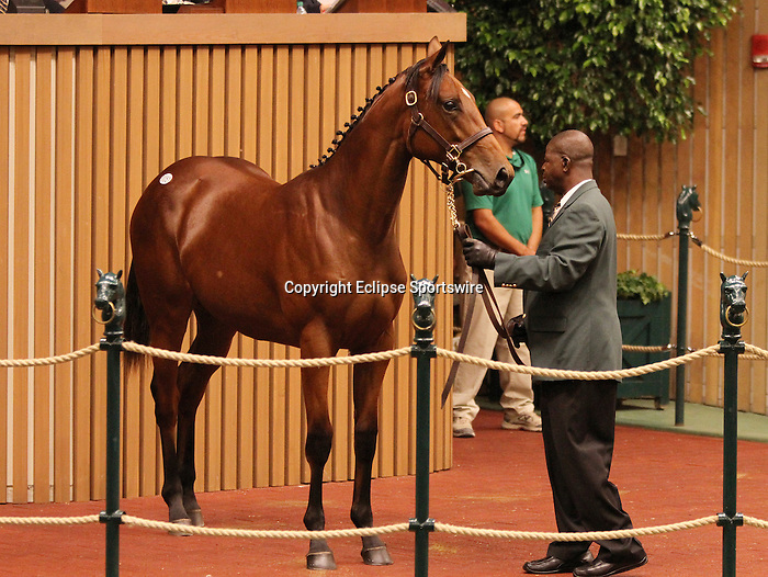 Hip #51 Indian Charlie - Witness Post at the Keeneland September Yearling Sale.  September 10, 2012.