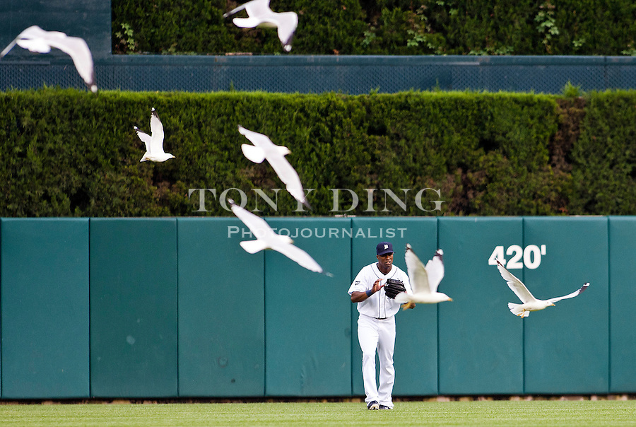 31 May 2011: Detroit Tigers center fielder Austin Jackson (14) catches a deep ball amongst a flock of seagulls during the Minnesota Twins at Detroit Tigers Major League Baseball game at Comerica Park, in Detroit, Michigan. The Tigers won 8-7.