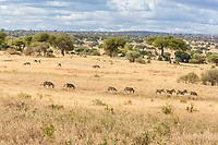 Tanzania.  Tarangire National Park. Scenic Landscape
