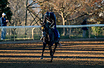 November 4, 2020: Outadore, trained by trainer Wesley A. Ward, exercises in preparation for the Breeders' Cup Juvenile Turf at Keeneland Racetrack in Lexington, Kentucky on November 4, 2020. Scott Serio/Eclipse Sportswire/Breeders Cup