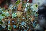 Anemones and tunicates, Ambon