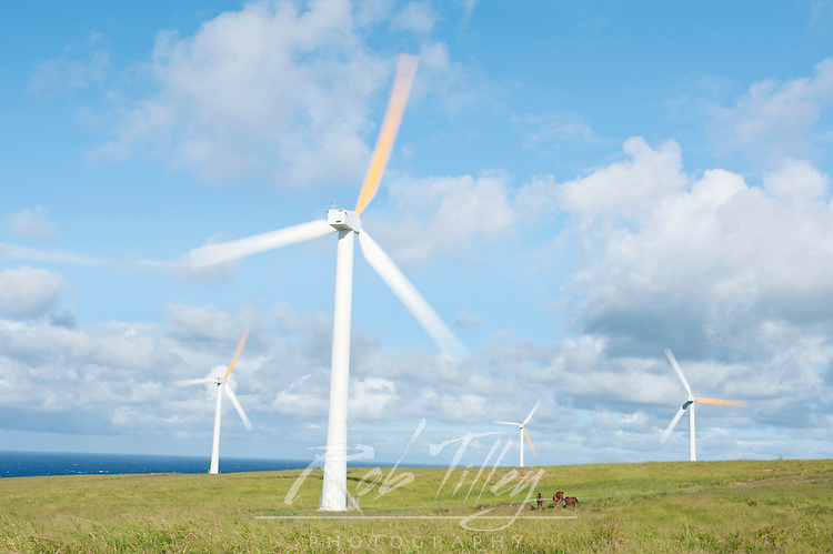 USA, HI, Kohala, Wind Turbines