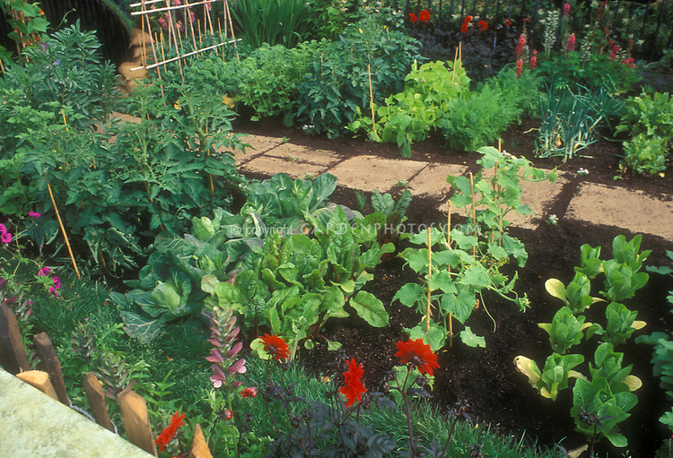 Pretty Vegetable garden with flowers, stone pathway, trellis, growing lettuce plants, cabbage, tomatoes, dahlias, climbing cucumbers on stake poles, onions, beans in nice rich dark soil dirt