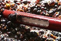 pinot noir fermenting must and grapes with thermometer  dom gachot-monot nuits-st-georges cote de nuits burgundy france