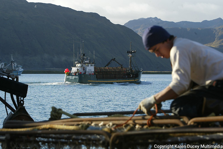 10/12/03 crab NWS::  Wilfredo Ovalles, age 27, from Los Angeles, helps get the F/V Alaskan Beauty based out of Seattle,Wa ready to go red king crab fishing by tying down crab pots while the F/V Determined, based out of Kodiak,AK, passes by loaded with a stack of pots in Ducth Harbor, AK.