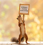 Squirrels encourage US voters to get out and vote by Geert Weggen