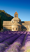 The 12th century Romanesque Cistercian Abbey of Notre Dame of Senanque ( 1148 ) set amongst the flowering lavender fields of Provence near Gordes, France.
