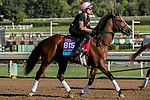 ARCADIA, CA  OCTOBER 30: Breeders' Cup Juvenile Turf entrant Peace Achieved, trained by Mark E. Casse,  exercises in preparation for the Breeders' Cup World Championships at Santa Anita Park in Arcadia, California on October 30, 2019.  (Photo by Casey Phillips/Eclipse Sportswire/CSM)