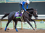 ARCADIA, CA - OCT 31: Midnight Storm, owned by Venneri Racing Inc. & Little Red Feather Racing and trained by Philip D'Amato, exercises in preparation for the Breeders' Cup Michael Stidhamat Santa Anita Park on October 31, 2016 in Arcadia, California. (Photo by Douglas DeFelice/Eclipse Sportswire/Breeders Cup)