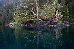 Alaska, Old growth forest, coastline, Prince William Sound, Esther Passage, Coastal temperate rain forest,
