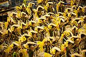 Imperatriz Leopolinense Samba School, Carnival, Rio de Janeiro, Brazil, 26th February 2017. Samba dancers dressed in 16th century uniforms to represent the arrival of Europeans in Brazil.