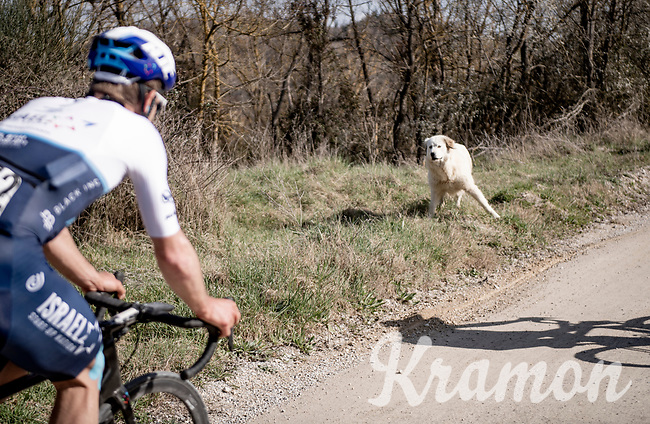 just DON't bring your dog to the races...<br /> <br /> 15th Strade Bianche 2021<br /> ME (1.UWT)<br /> 1 day race from Siena to Siena (ITA/184km)<br /> <br /> ©kramon