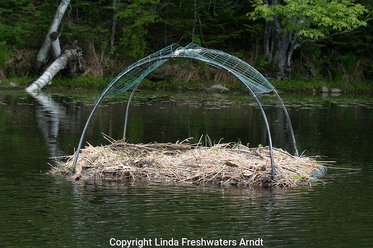 Loon artificial nesting platform