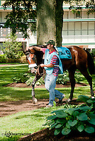 Koh I Norr before The Joe French Memorial Stakes at Delaware Park on 6/1/13