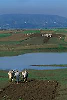 Asie/Birmanie/Myanmar/Haute Birmanie/Mandalay/Amarapura: Le long de la route du port, travaux des champs - Attelages de buffles