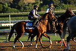 ARCADIA, CA  OCTOBER 26: Breeders' Cup Dirt Mile entrant Giant Expectations, trained by Peter A. Eurton, exercises in preparation for the Breeders' Cup World Championships at Santa Anita Park in Arcadia, California on October 26, 2019. (Photo by Casey Phillips/Eclipse Sportswire/CSM)