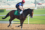 DUBAI,UNITED ARAB EMIRATES-MARCH 29: Idaho,trained by Aidan O'Brien,exercises in preparation for the Dubai Sheema Classic at Meydan Racecourse on March 29,2018 in Dubai,United Arab Emirates (Photo by Kaz Ishida/Eclipse Sportswire/Getty Images)
