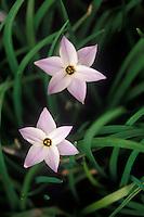 Spring flowers, Duben Botanical Garden