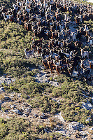 France, Bouches-du-Rhône (13),env de  Marseille, Le Rove:  Le troupeaux de Chêvres du Rove ,  d'André Gouiran, éleveur de chèvre du Rove et producteur de brousse du Rove  //  France, Bouches du Rhone, near Marseille:    Herd of goats Rove André Gouiran, Rove goat breeder and producer of  of  the Real Rove Brousse, pure goat cheese  <br /> AUTO N 2013-150