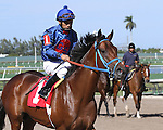 Scenes from Gulfstream Park. Sea of Faces (KY) with jockey Paco Lopez on board at Gulfstream Park.  Hallandale Beach, Florida 02-22-2014