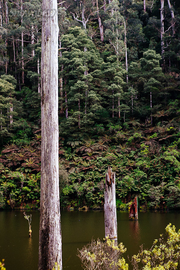Image Ref: CA592<br /> Location: Lake Elizabeth, Forrest<br /> Date of Shot: 20.10.18