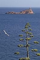 """- Portoferraio (island of Elba),  lighthouse of the """"Scoglietto"""",  flower of agave....- Portoferraio (isola d'Elba), faro dello """"Scoglietto, fiore di agave"""