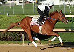 April 23, 2014 Rosalind, trained by Kenny McPeek, gallops at Churchill Downs with rider Danny Ramsey.  She is owned by Landaluce Educe Stables and recenty won the Ashland Stakes at Keeneland in a dead heat with Room Service.