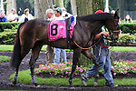 Skylighter  before the Obeah Stakes at Delaware Park in New Stanton, Delaware 06.20.09