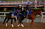 October 28, 2019 : Breeders' Cup Distaff entrant Midnight Bisou, trained by Steven M. Asmussen, exercises in preparation for the Breeders' Cup World Championships at Santa Anita Park in Arcadia, California on October 28, 2019. Scott Serio/Eclipse Sportswire/Breeders' Cup/CSM