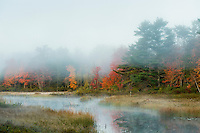 Misty morning landscape, Somesville, Maine, USA