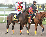 Ducduc post parade. Graybar with Edgar Prado wins the 57th running of the Grade 1 Donn Handicap for 4 year olds & up, going 1 1/8 mile, at Gulfstream Park.  Trainer - Todd Pletcher.  Owner - Twin Creek Racing Stable