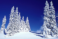 snow, evergreen trees, Switzerland, Vaud, Jura Mountains, Europe, Picturesque snow covered evergreen forest in the winter in the Jura Mountains.