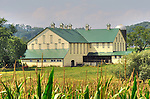 Yellow barn with green roof in August.