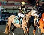 NEW YORK, NY - FEB 04: Square Shooter in post parade for the Withers Stakes on Withers Stakes Day at Aqueduct Racetrack on February 4, 2017 in the Ozone Park neighborhood of New York, New York. (Photo by Sue Kawczynski/Eclipse Sportswire/Getty Images)