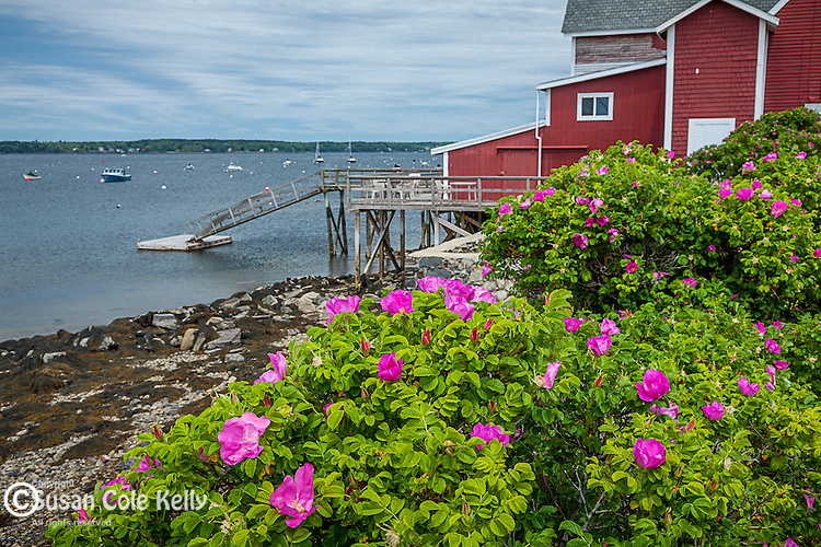 Red boathouse on Orr's Island in Harpswell, Maine, USA