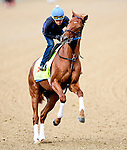 LOUISVILLE, KY - MAY 04: Gun Runner, trained by Steven Asmussen and owned by Winchell Thoroughbreds LLC and Three Chimneys Farm, exercises and prepares during morning workouts for the Kentucky Derby and Kentucky Oaks at Churchill Downs on May 4, 2016 in Louisville, Kentucky. (Photo by John Voorhees/Eclipse Sportswire/Getty Images)